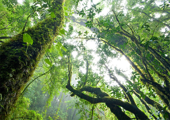 Tropical forest with lots of foilage | Picture Perfect Cleaning