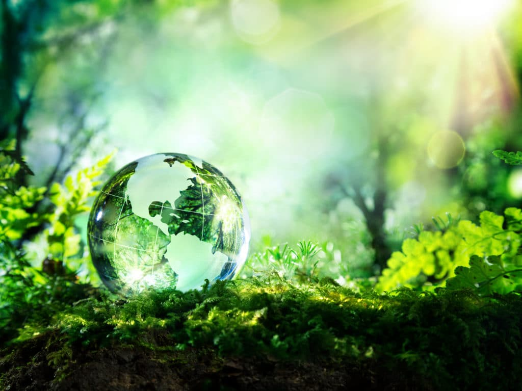 Usa globe resting in a forest - environment concept | picture perfect cleaning